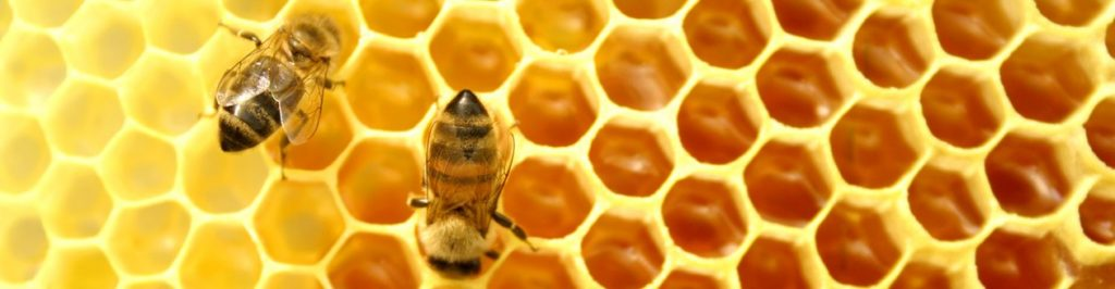 Chemical-Free Hive Removal Experts